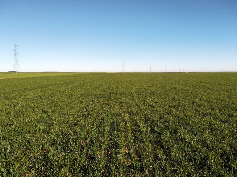 Ventajas de la aplicación de SUPERNITRO en zonas vulnerables de nitratos
