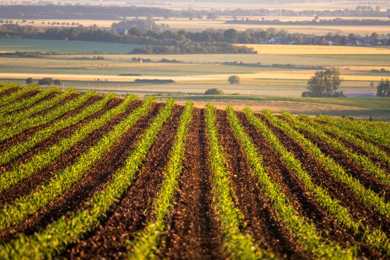 Todo a punto para las primeras coberteras en maíz